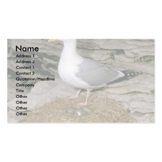 Herring Gull with eggs Double-Sided Standard Business Cards (Pack Of 100)