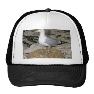 Herring Gull with eggs Hats
