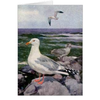 Herring Gulls on Rocky Shoreline Greeting Card