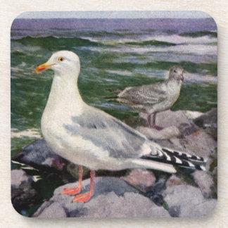 Herring Gulls on Rocky Shoreline Beverage Coasters