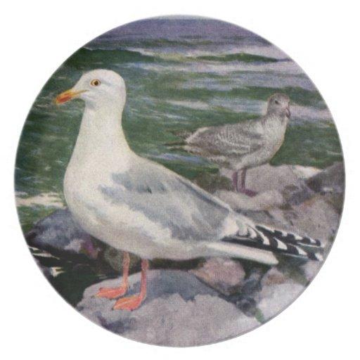 Herring Gulls on Rocky Shoreline Dinner Plate