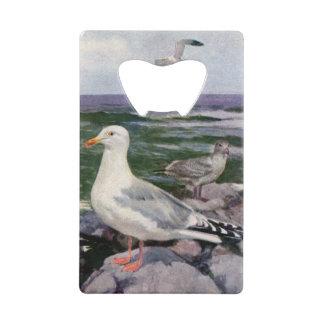 Herring Gulls on Rocky Shoreline Credit Card Bottle Opener
