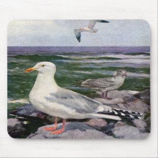 Herring Gulls on Rocky Shoreline Mousepad