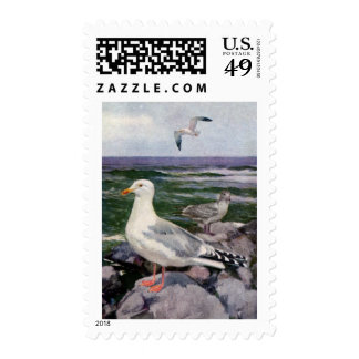 Herring Gulls on Rocky Shoreline Stamp