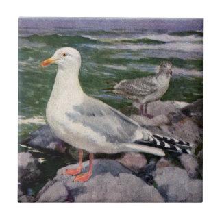 Herring Gulls on Rocky Shoreline Ceramic Tile