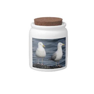 Herring Gulls Photograph Candy Jars