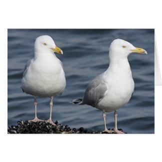 Herring Gulls Photograph Cards