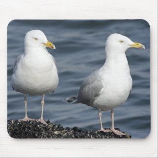 Herring Gulls Photograph Mouse Pad
