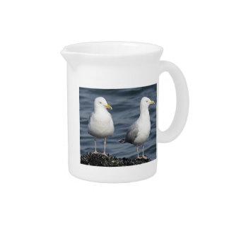 Herring Gulls Photograph Drink Pitchers