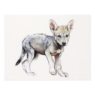 Hesitating Arabian Wolf Pup 2009 Postcard