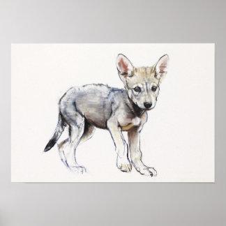 Hesitating Arabian Wolf Pup 2009 Poster