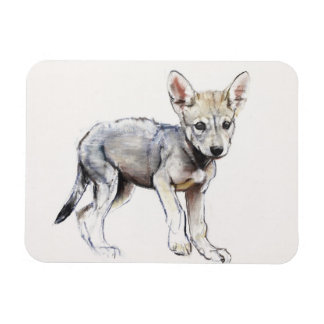 Hesitating Arabian Wolf Pup 2009 Rectangular Photo Magnet