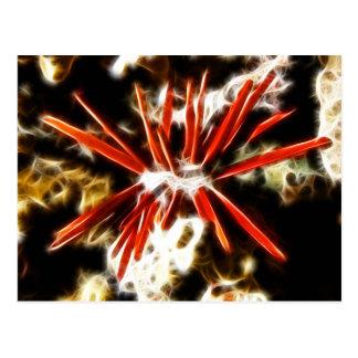 Heterocentrotus Mammillatus Slate Pencil Urchin Postcard