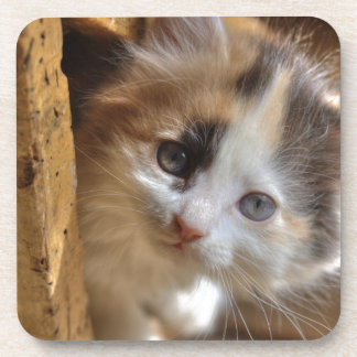 Heterochromia Calico Kitten Drink Coaster