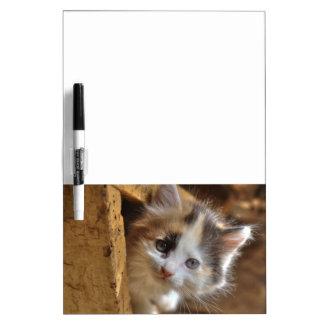 Heterochromia Calico Kitten Dry Erase Board