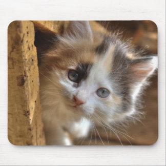 Heterochromia Calico Kitten Mouse Pad