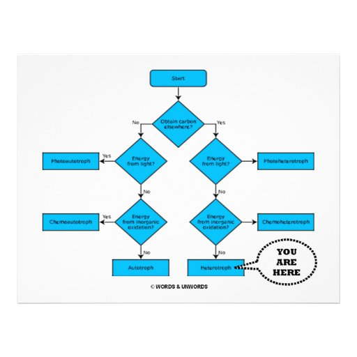 Heterotroph Flow Chart - You Are Here Letterhead Template