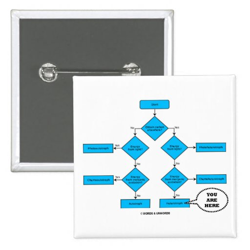 Heterotroph Flow Chart - You Are Here Pins