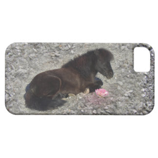 hety Shetland Pony Mini Horse Animal Pets iPhone SE/5/5s Case