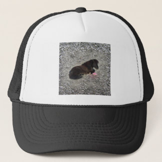hety Shetland Pony Mini Horse Animal Pets Trucker Hat