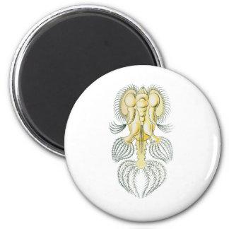 Hexarthra 2 Inch Round Magnet