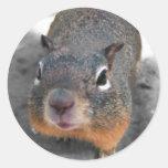 Hey cutey funny squirrel sticker