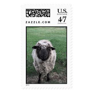 Hey Ewe Postage