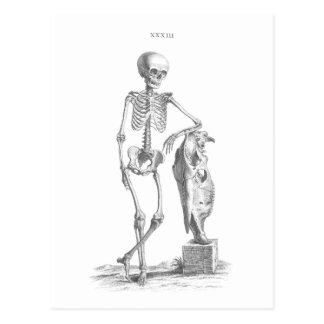 Hey Girl vintage skeleton Postcard
