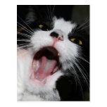 Hey I Am TALKING TO YOU!!! Crazy Cat Postcard