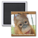 Hey, I'm a Cute Primate Magnets