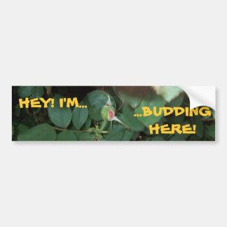 HEY! I'M BUDDING HERE! ~ BUMPER STICKER