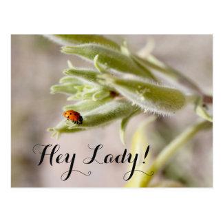 Hey Lady Postcard
