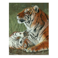 Hey Mom Wake Up! Tiger cub and mother postcard