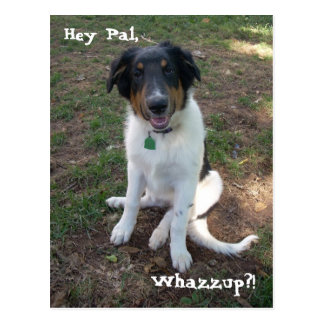 Hey Pal, Whazzup?! Postcard