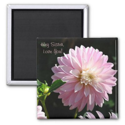 Hey Sister Love You! PINK DAHLIAS magnets, DAHLIA FLOWERS magnet gifts, Big Dinner Plate Dahlia Flowers, MAGNET, Magnets. Bookmark this site for great gift
