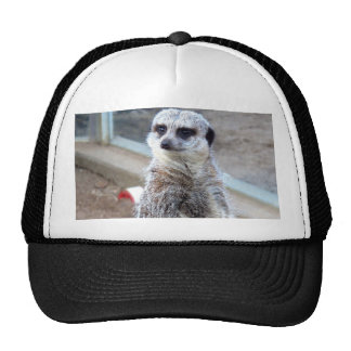 Hey Who Do You Think You'r Looking At? Trucker Hat
