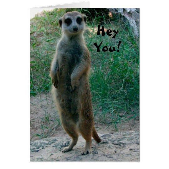 Hey You Meerkat Birthday Card Zazzle