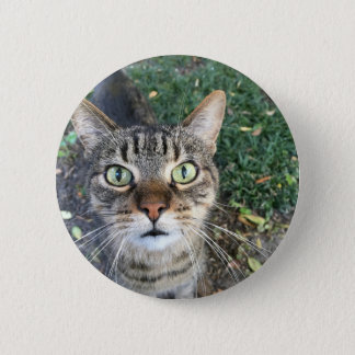 """Hey You"" says this cat Pinback Button"
