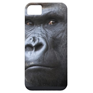 Hi. iPhone 5 Cases