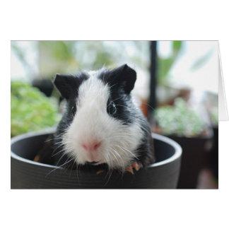 Hi Guinea Pig Card