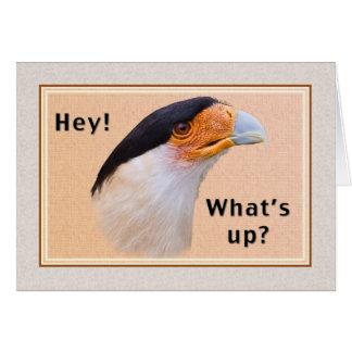Hi/Hello Card, Crested Caracara Bird