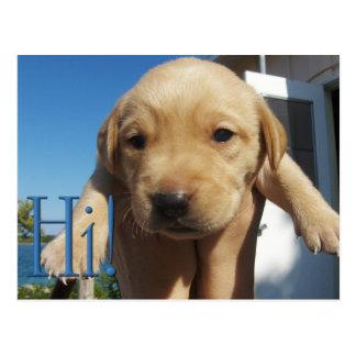 Hi, Hello - Popping Up to Say Hi! - Labrador Puppy Postcard