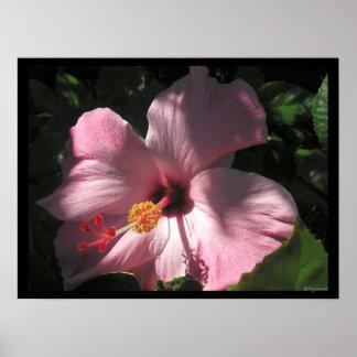 Hi Hibiscus Luscious Shadows Poster Print Print