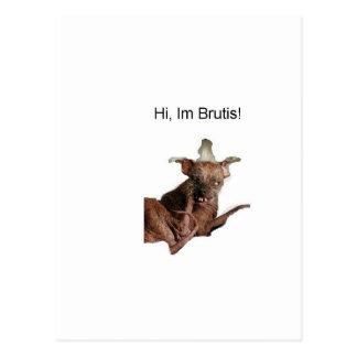 Hi im brutis postcard