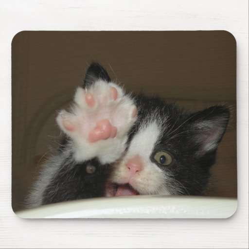 """""""Hi!"""" kitten mouse pad"""