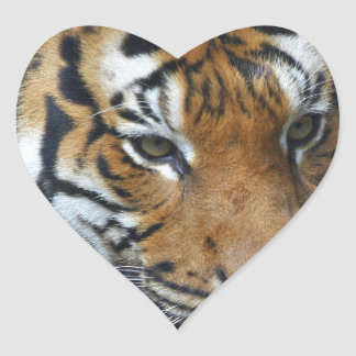 Hi-Res Malay Tiger Close-up Heart Sticker