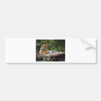 Hi-Res Malay Tiger Lounging on Log Bumper Sticker