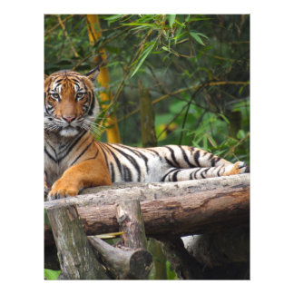 Hi-Res Malay Tiger Lounging on Log Letterhead