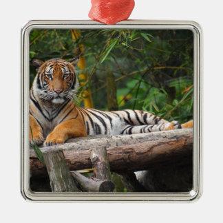 Hi-Res Malay Tiger Lounging on Log Metal Ornament