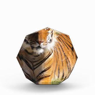 Hi-Res Malayan Tiger Award